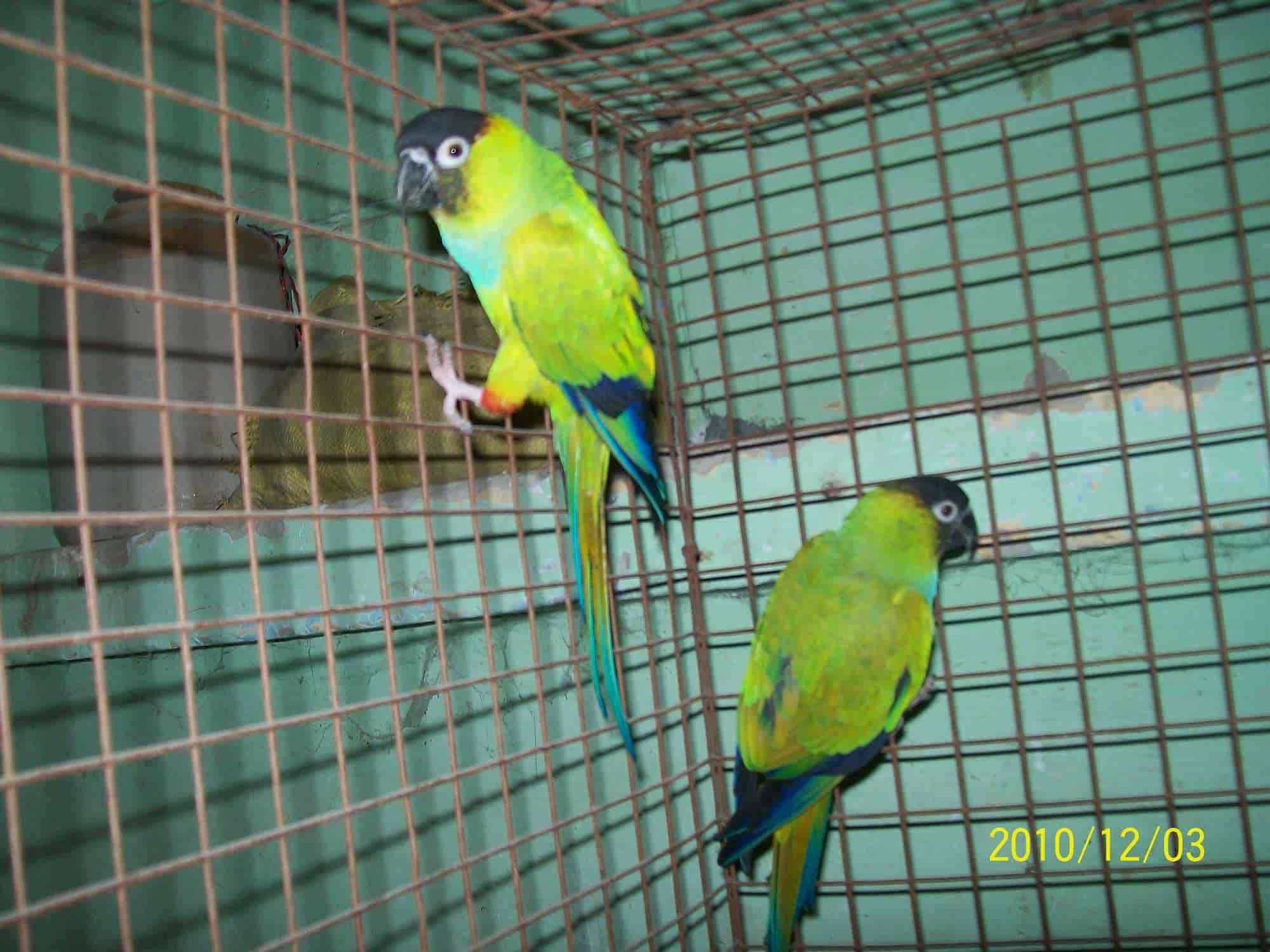 Pet parrot price in delhi