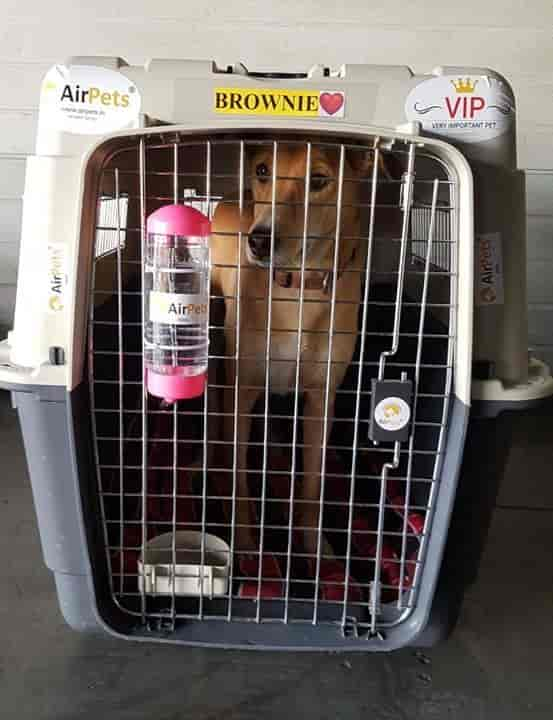 Airpets Relocation Services Pvt Ltd, Kapashera - Pet