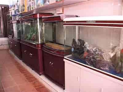 Fish Aquarium Home Laxmi Nagar Aquarium Fish Dealers In Delhi