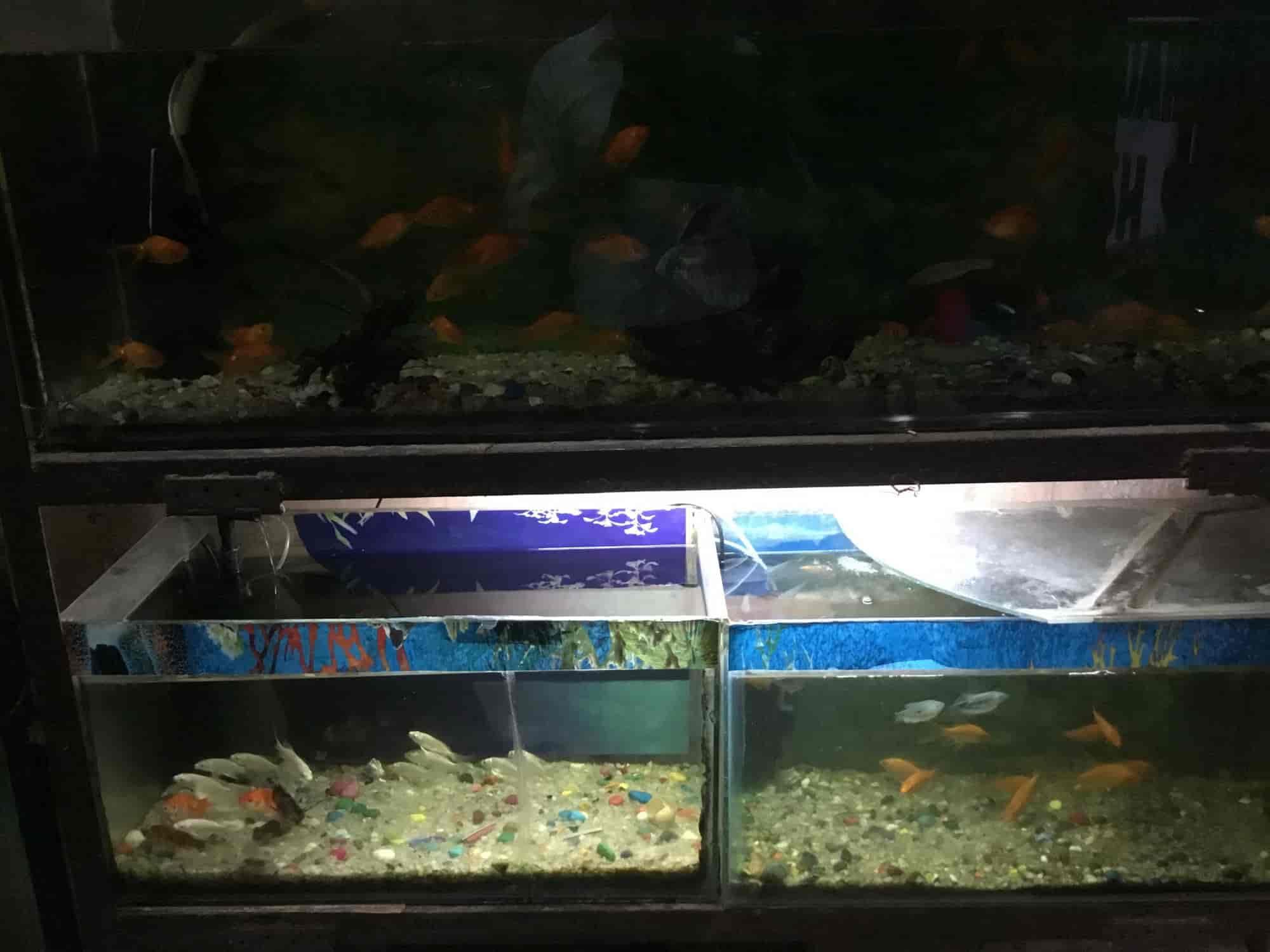 Baba Ji Fish World Aquarium Subhash Nagar Aquarium Fish Dealers