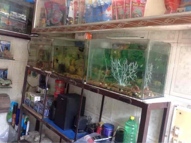 Aquarium fish shop in bangalore dating