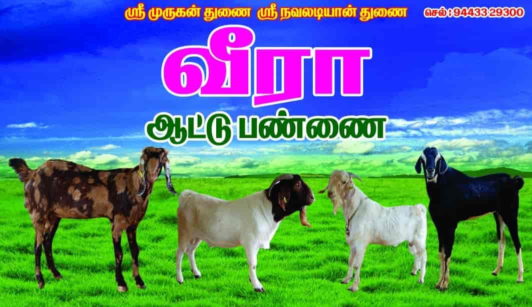 Veera Goat Farm Photos, Vedasandur, Dindigul- Pictures & Images