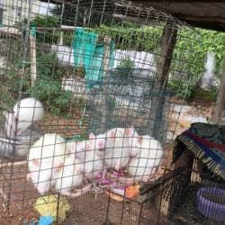 Pet World, Near Bank Of Baroda - Pet Shops in Eluru - Justdial