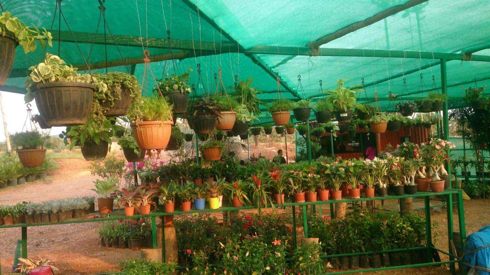 Plants Green Valley Nursery Photos Salcette Goa Plant Nurseries