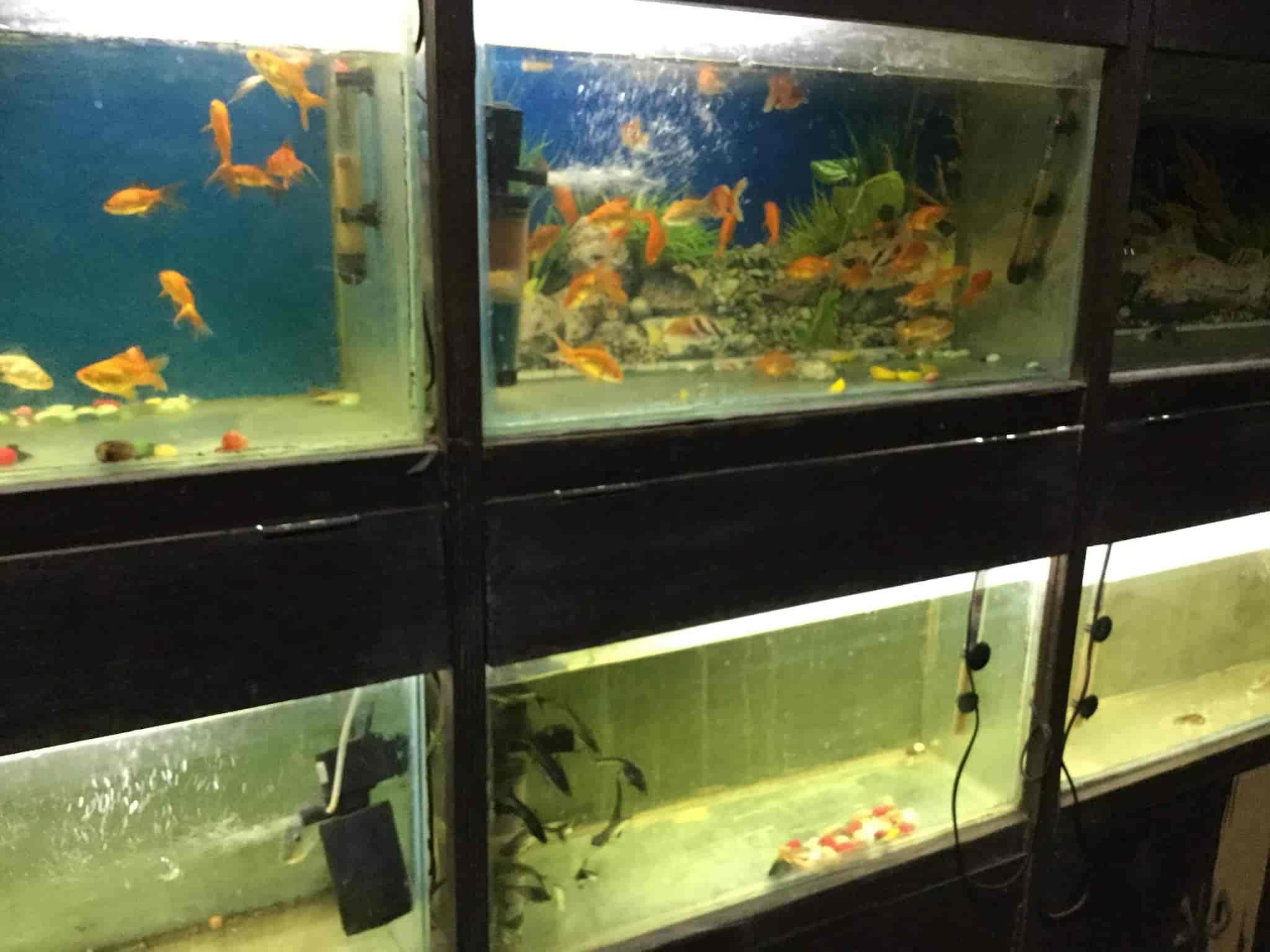 fish home aquarium pets shop photos south city 1 gurgaon pictures