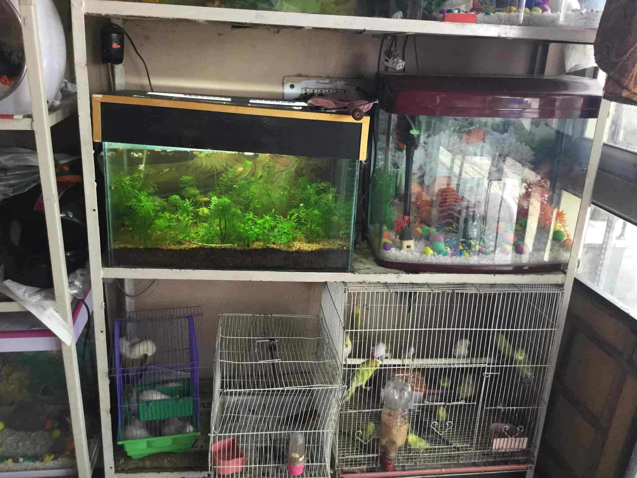 Aquarium Supply Store Near Me Martas Pet Shop Toronto Pet