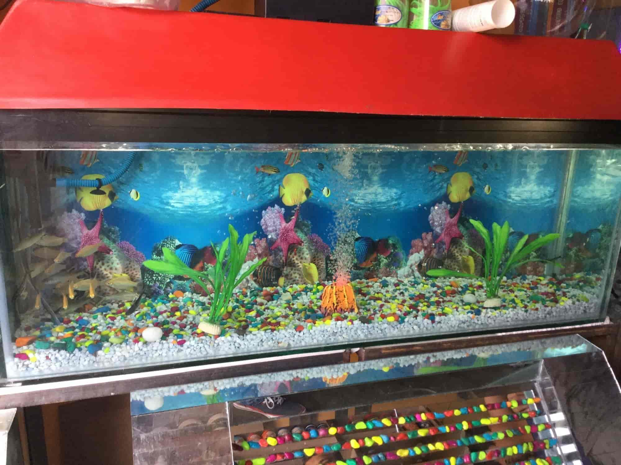 Home Fish Aquarium Photos Thatipur Gwalior Pictures Images
