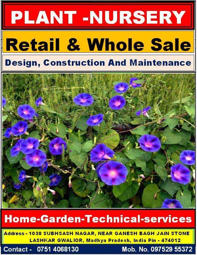 Our Catalog Home Garden Technical Services Whole Plant Nursery Photos Gwalior
