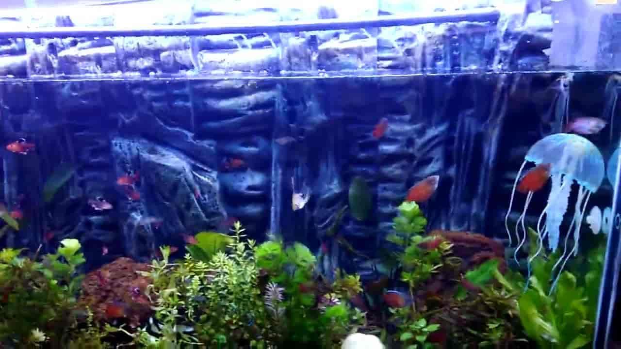Arora Fish Aquarium Nd Pet Shop Dogran Mohalla Pet Shops In Hissar Justdial
