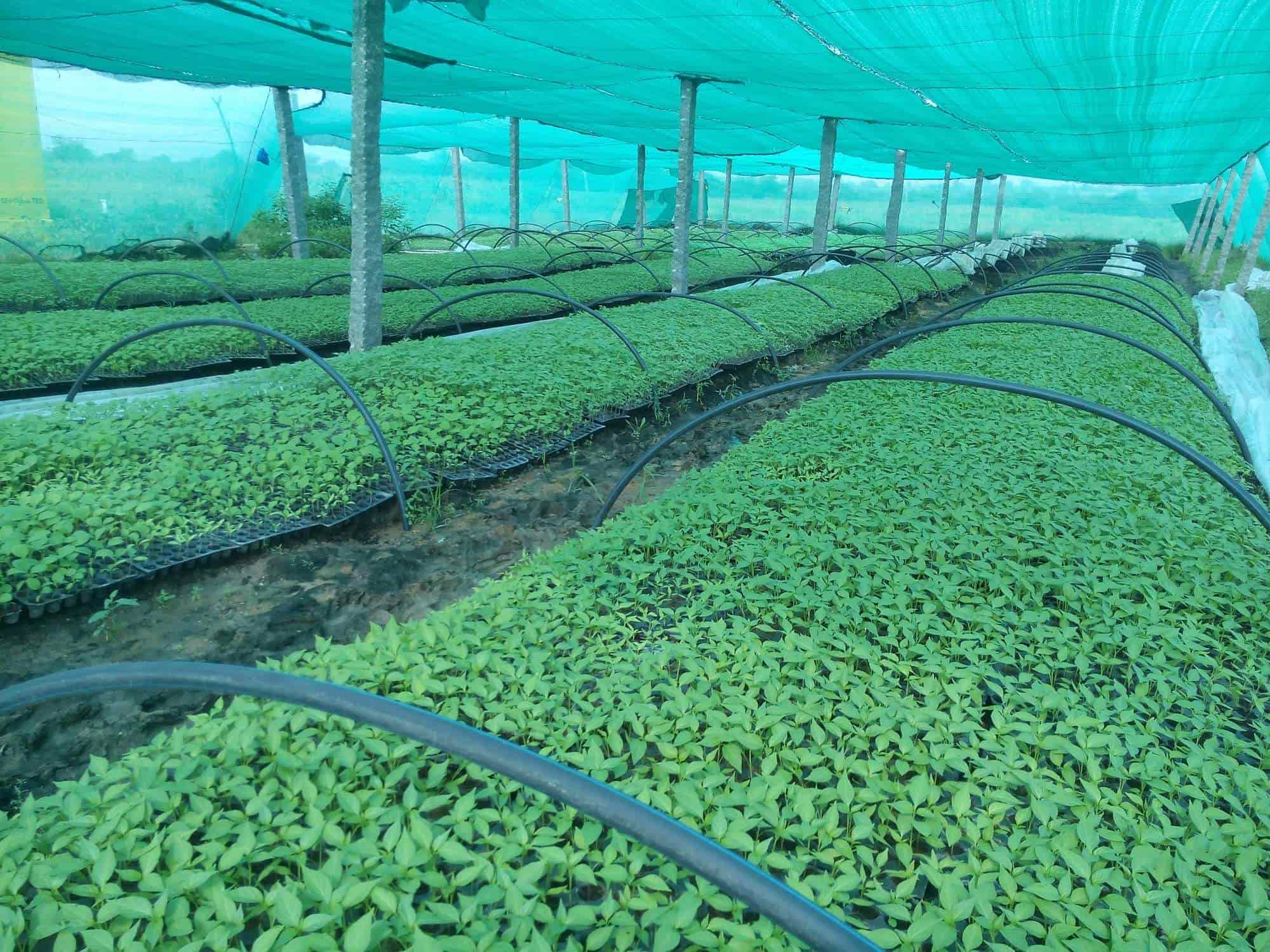 Inside View Sri Krishna Vegetable Nursery Photos Lingampally Hyderabad Plant Hire