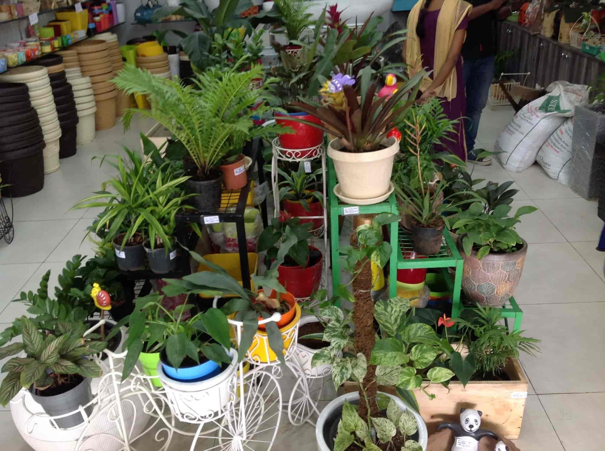 ... The Garden Store Photos, Jubilee Hills, Hyderabad   Plant Nurseries ...
