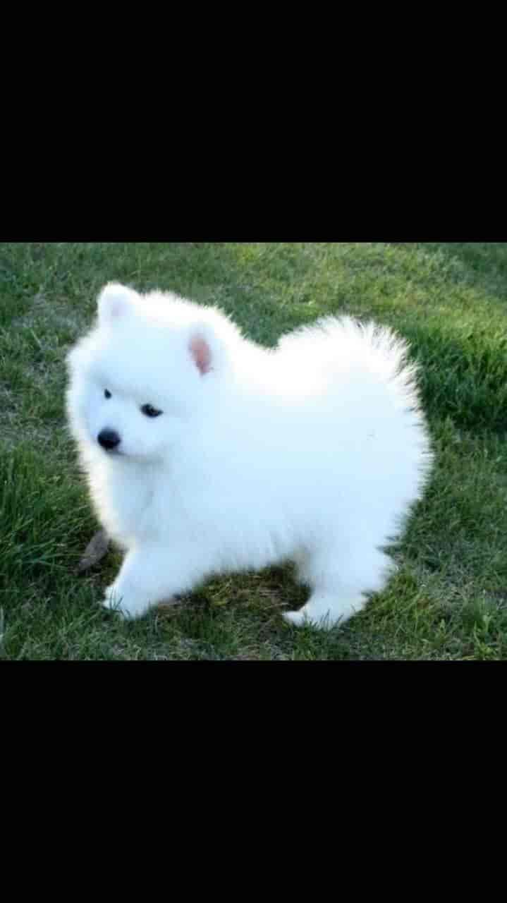Olx Pets