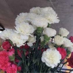 d9993b969cf3 ... Product View - Satish Florist - photos