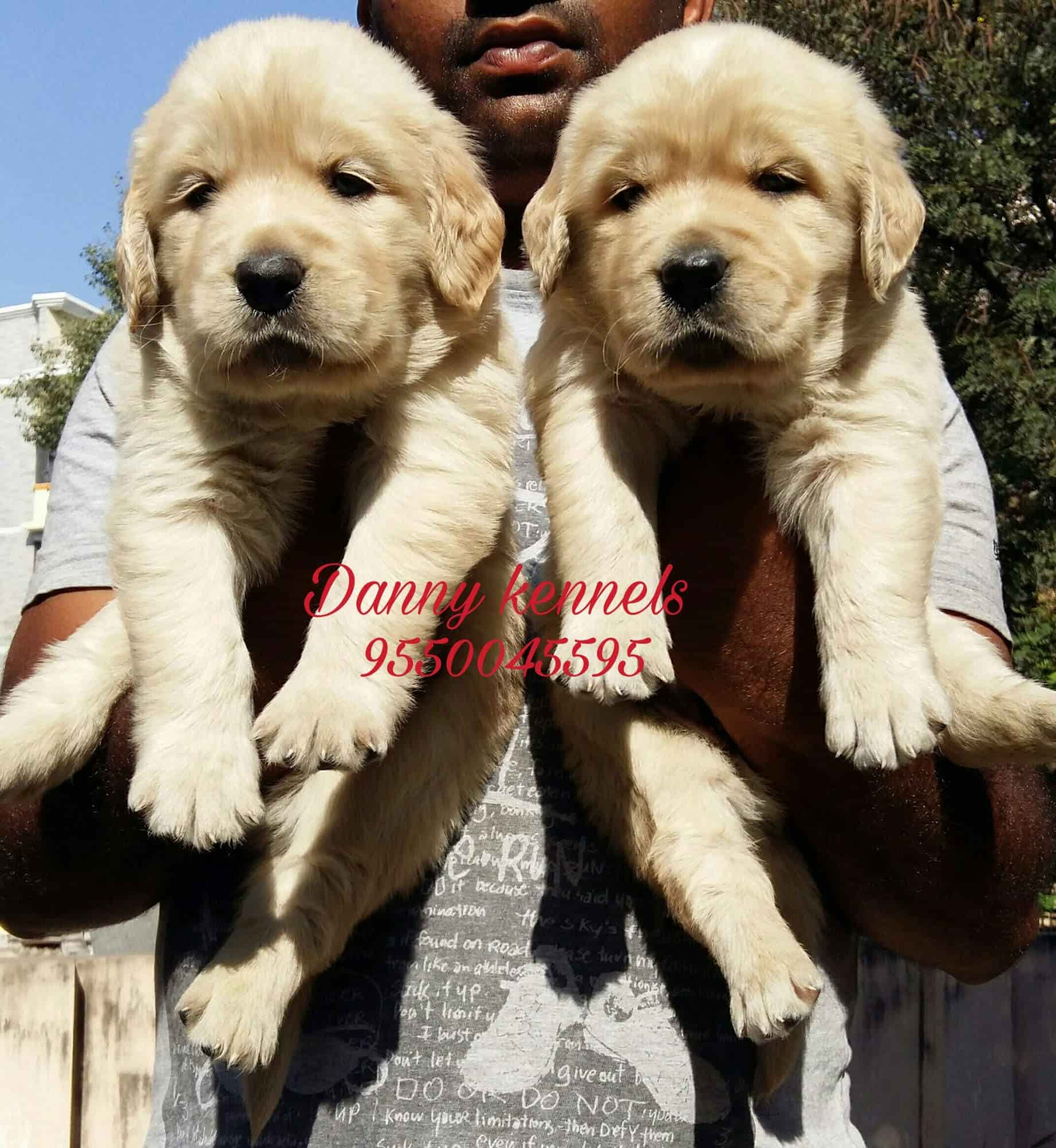 Danny Kennels Secunderabad Kennel Service In Hyderabad Justdial