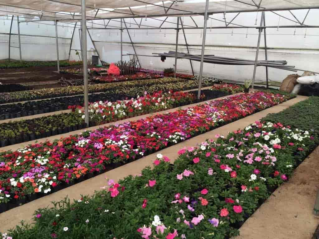 Green House Nursery Khandwa Road Tree Nurseries In Indore