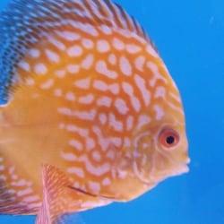 Aquatica, Vijay Nagar - Aquariums in Indore - Justdial