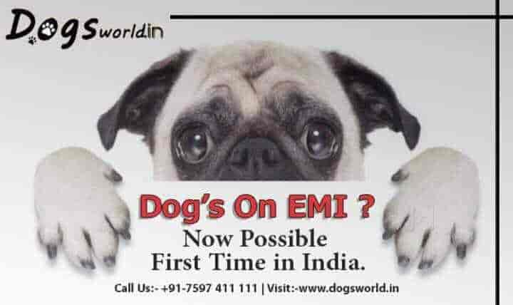 Dogs World Vaishali Nagar Pet Shops In Jaipur Justdial
