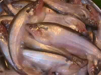 Fish Seeds Suppliers In India Photos, Bani Park, Jaipur- Pictures