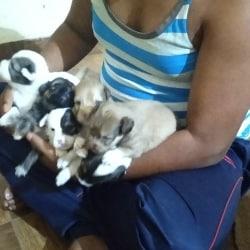 Mister DOG PET SHOP, Vaishali Nagar - Pet Shops in Jaipur - Justdial
