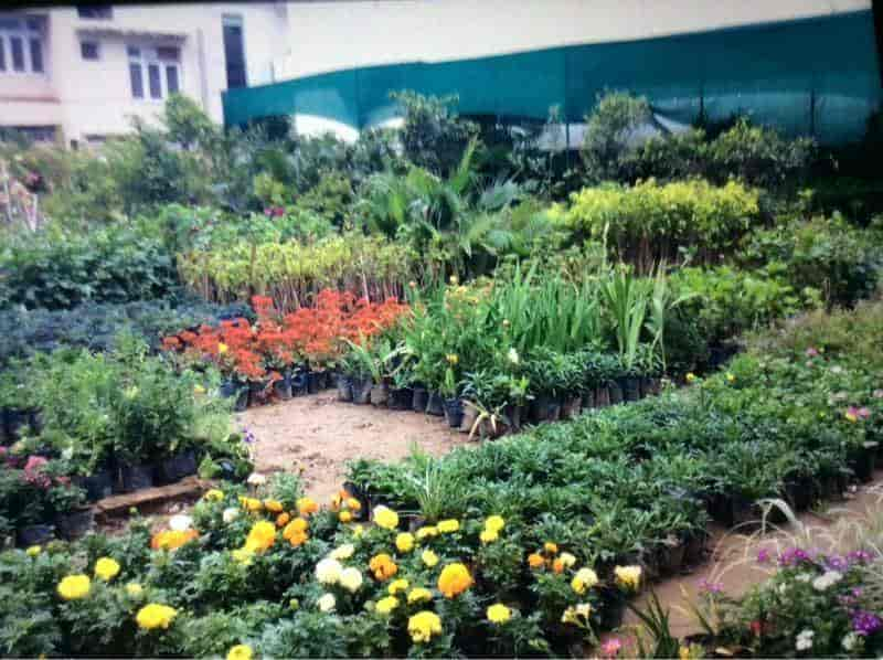 Evergreen Nursery Photos Jammu Plant Nurseries