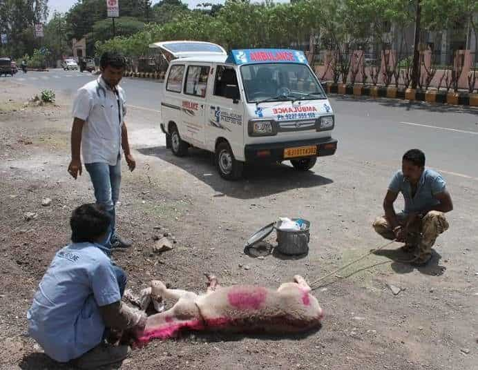 Animal Helplines Photos, Udyognagar, Rajkot- Pictures & Images