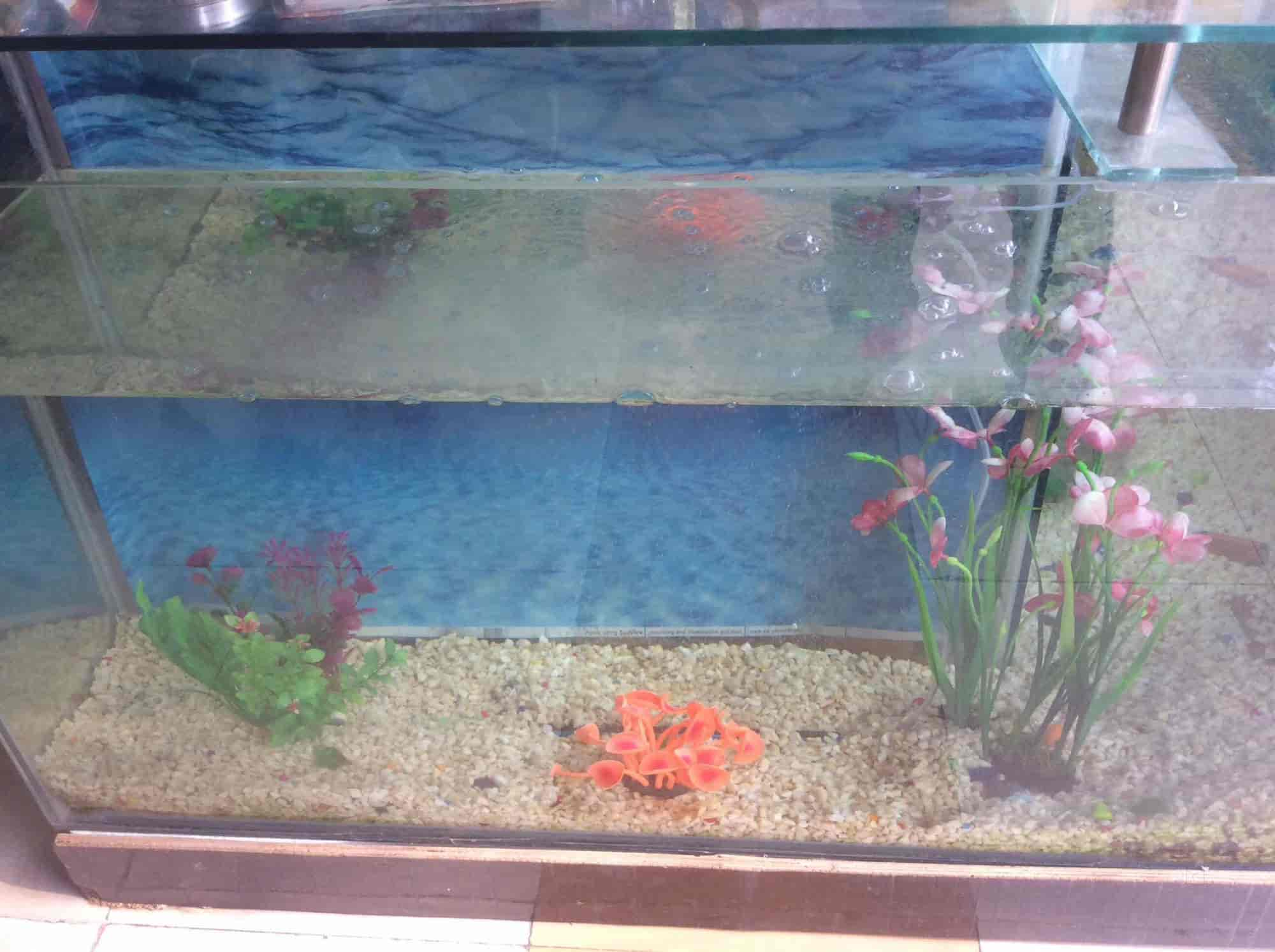 The Ultimate Fish Aquarium Pet Care Shop s Civil Lines Jhansi