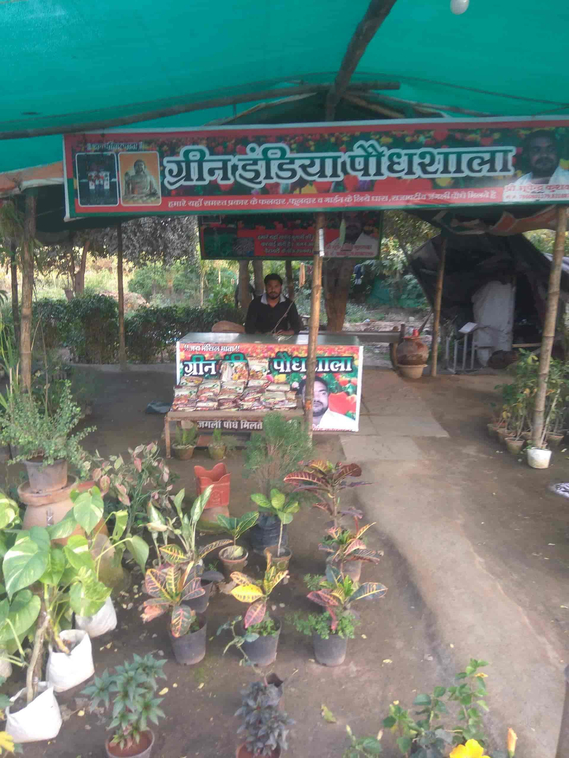 Green India Plantation Barwasagar Plant Nurseries In Jhansi Justdial