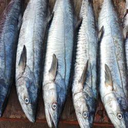 SUPREME FRESH FISH SUPPLIERS (seafood), Mangrol - Fish