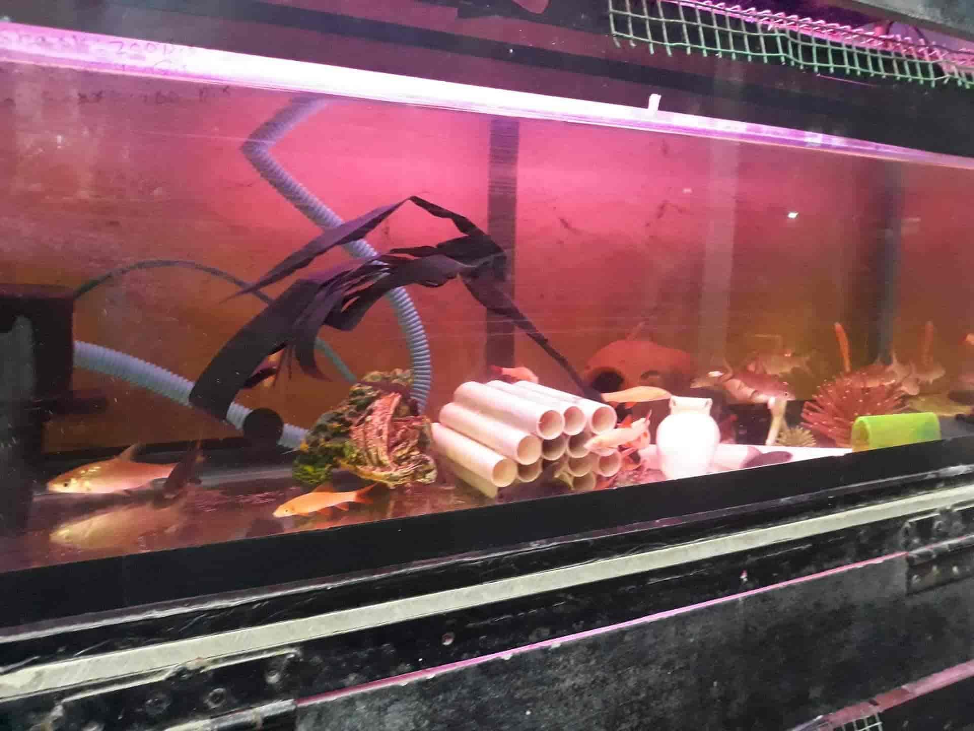 Indian Aquarium Fishes Photos Kadapa Pictures Images Gallery