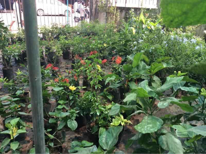 Malanad Nursery Gardens Kiliyanthara