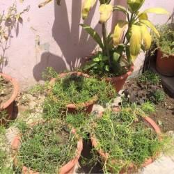 Raju Gardening, Barra - Plant Nurseries in Kanpur - Justdial