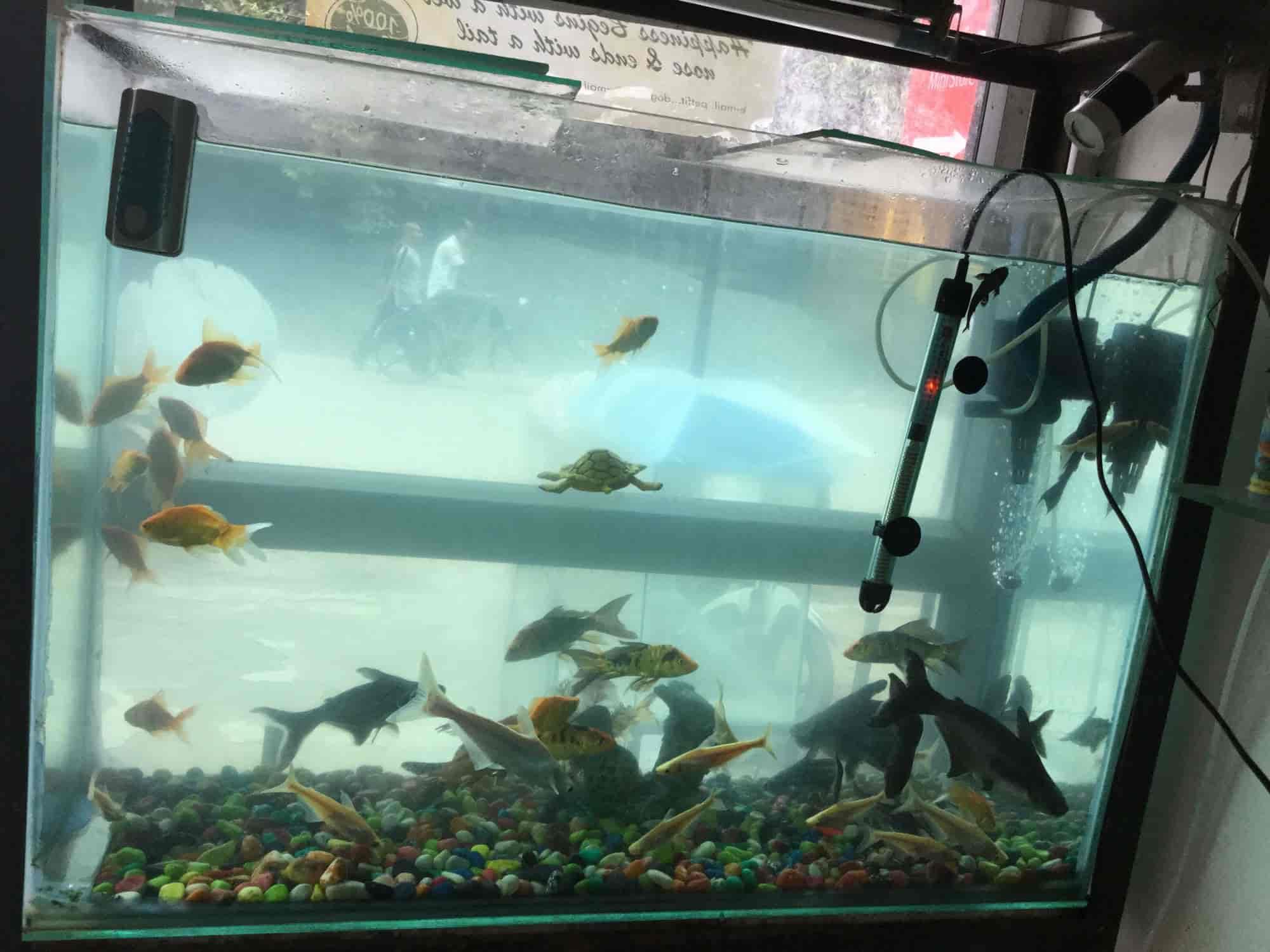 Purnima Fish Aquarium Nawabganj Purneema Fish Aquarium Pet
