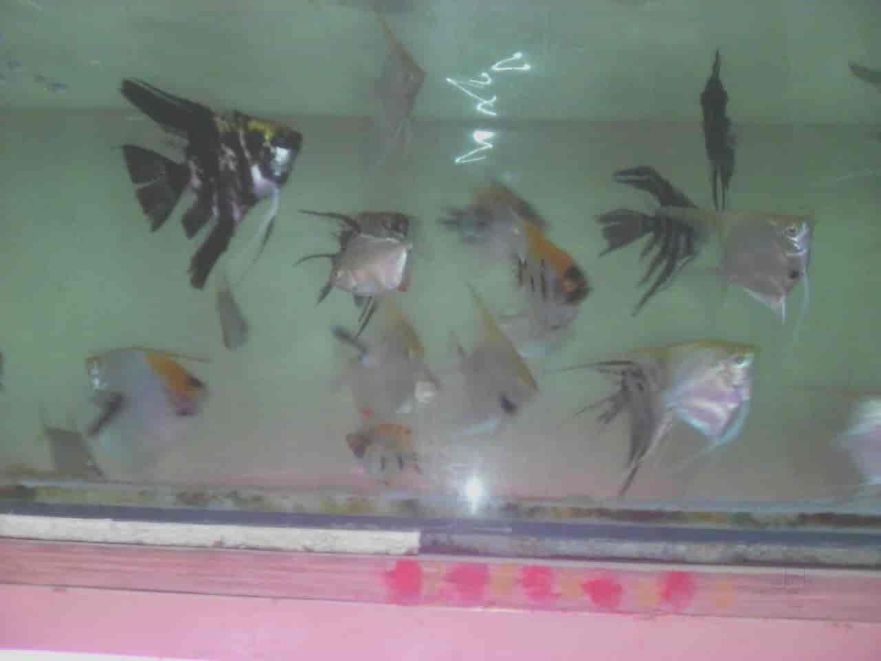 Jalpari Fish
