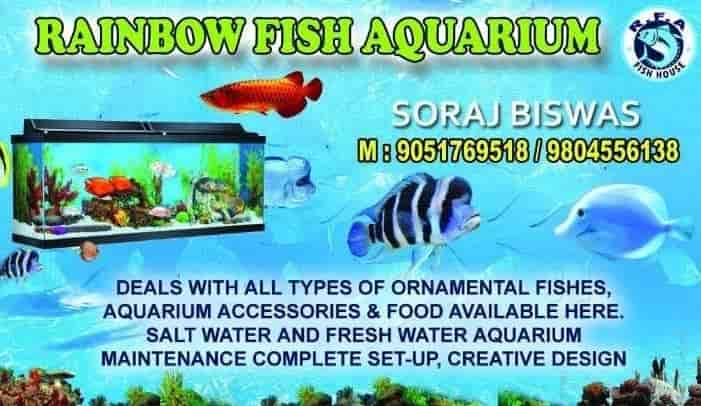 Rainbow Fish Aquarium Safuipara Aquarium Fish Dealers In Kolkata Justdial