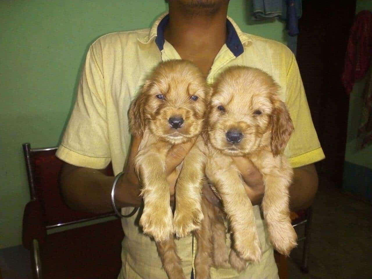 Pet World Pet Shops In Kolkata Justdial