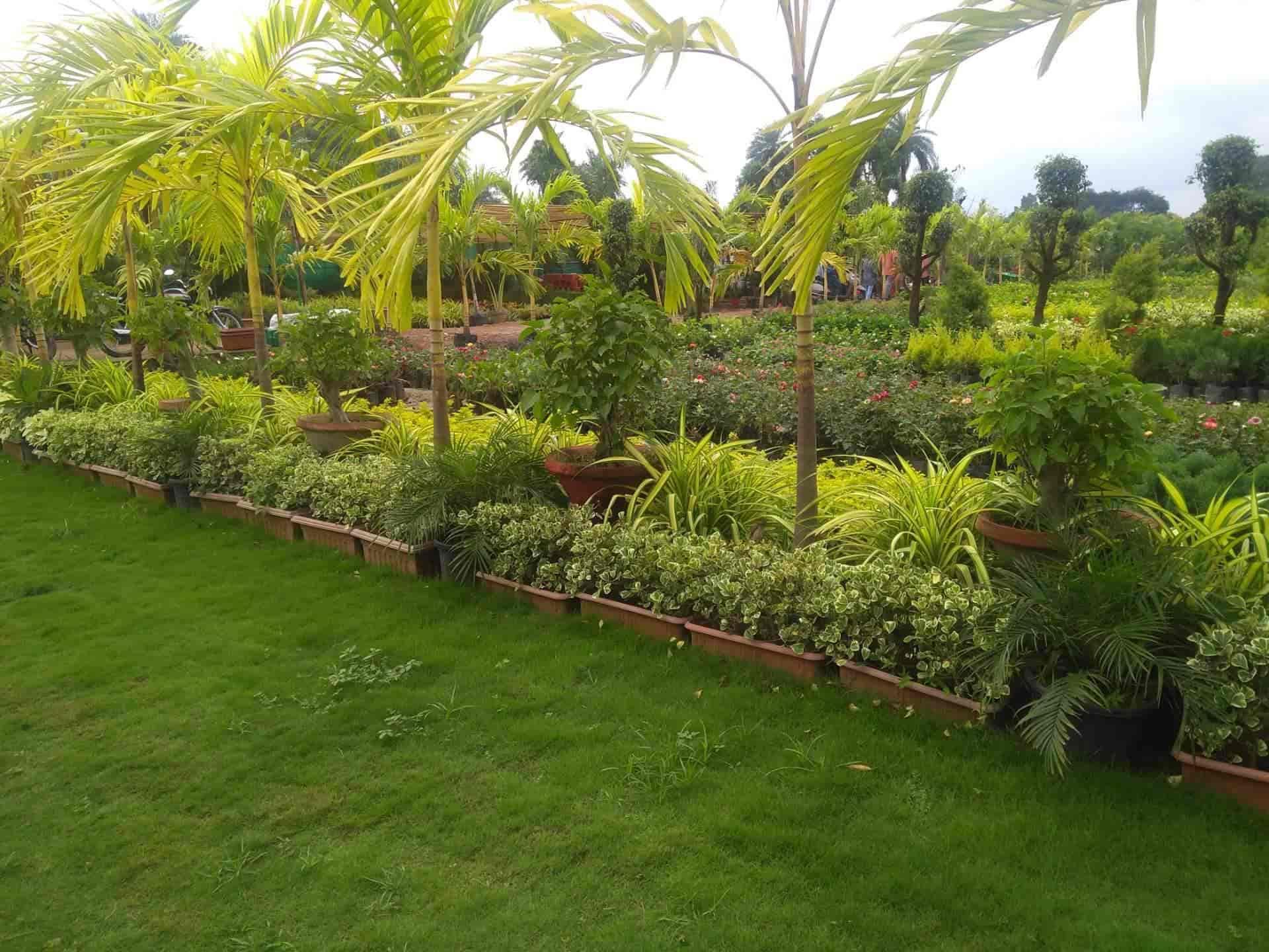 Beauty Home Garden Nursery Plant Nurseries In Kota Rajasthan