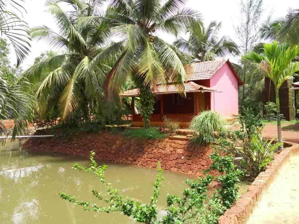 go green homestay home stay in kumta justdial