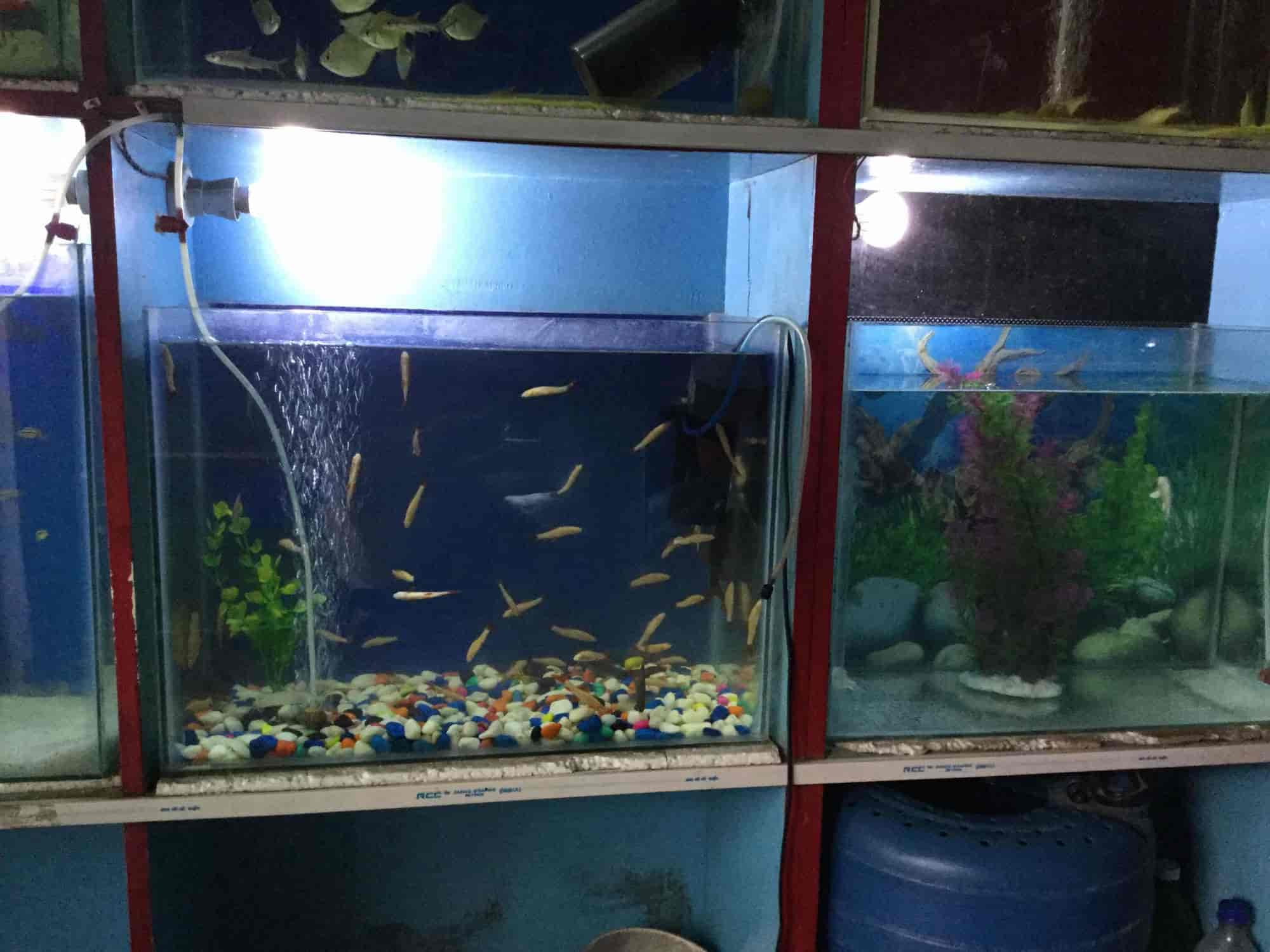 Chandra Aquarium Indira Nagar Lucknow Aquariums in Lucknow Justdial
