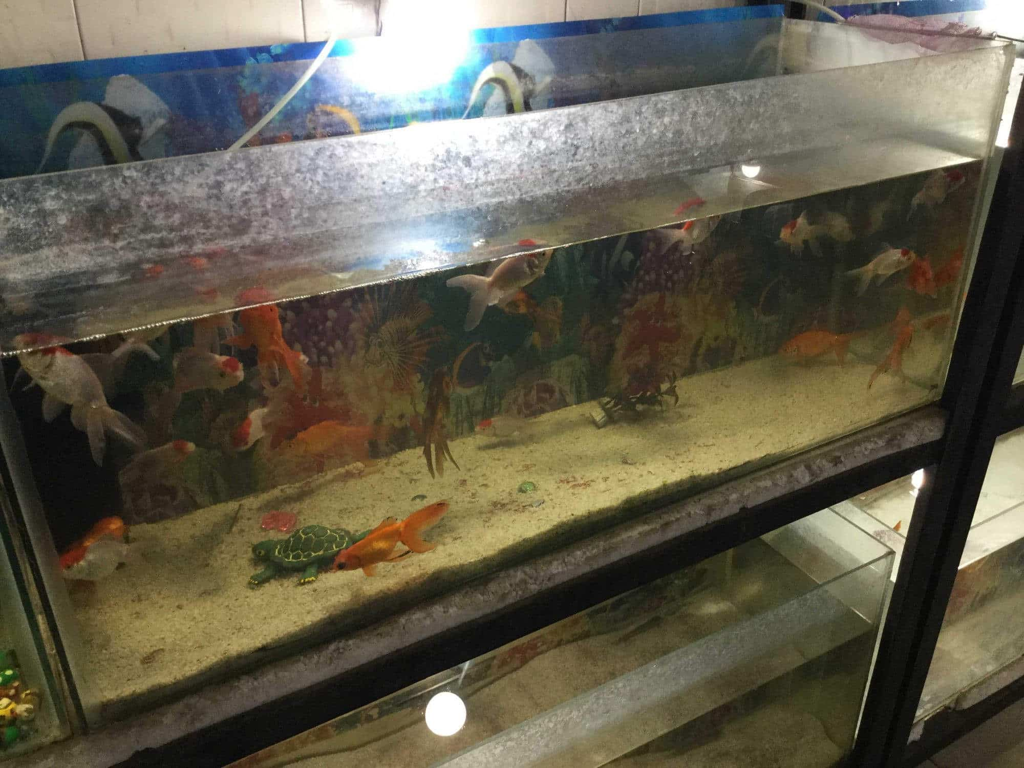 Kolkata Fish Aquarium Photos Alambagh Lucknow Pictures Images