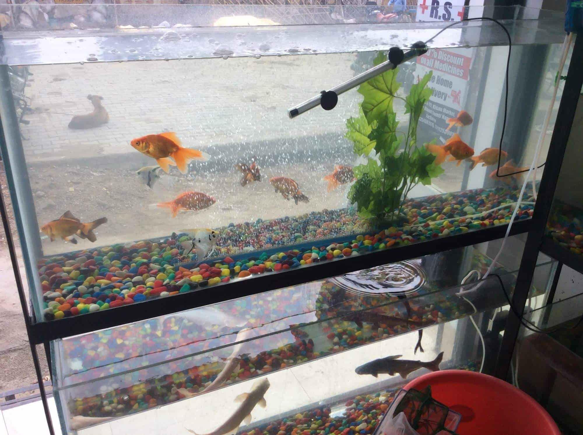 Sakshi Aquarium Chinhat Aquariums in Lucknow Justdial