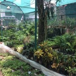 Adenium Nursery, Indira Nagar Lucknow - Plant Nurseries in Lucknow