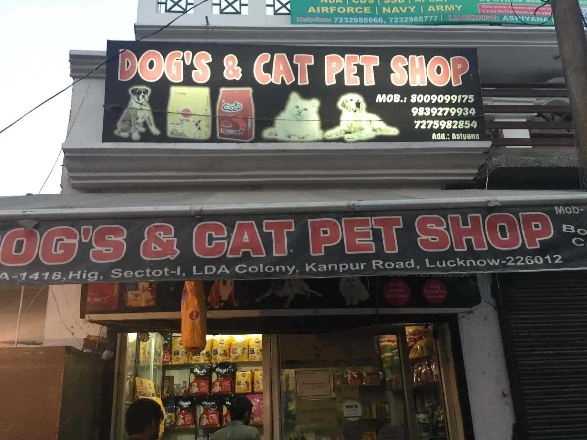 Dogs & Cat Pet Shop, Aashiyana - Pet Shops For Dog in Lucknow - Justdial