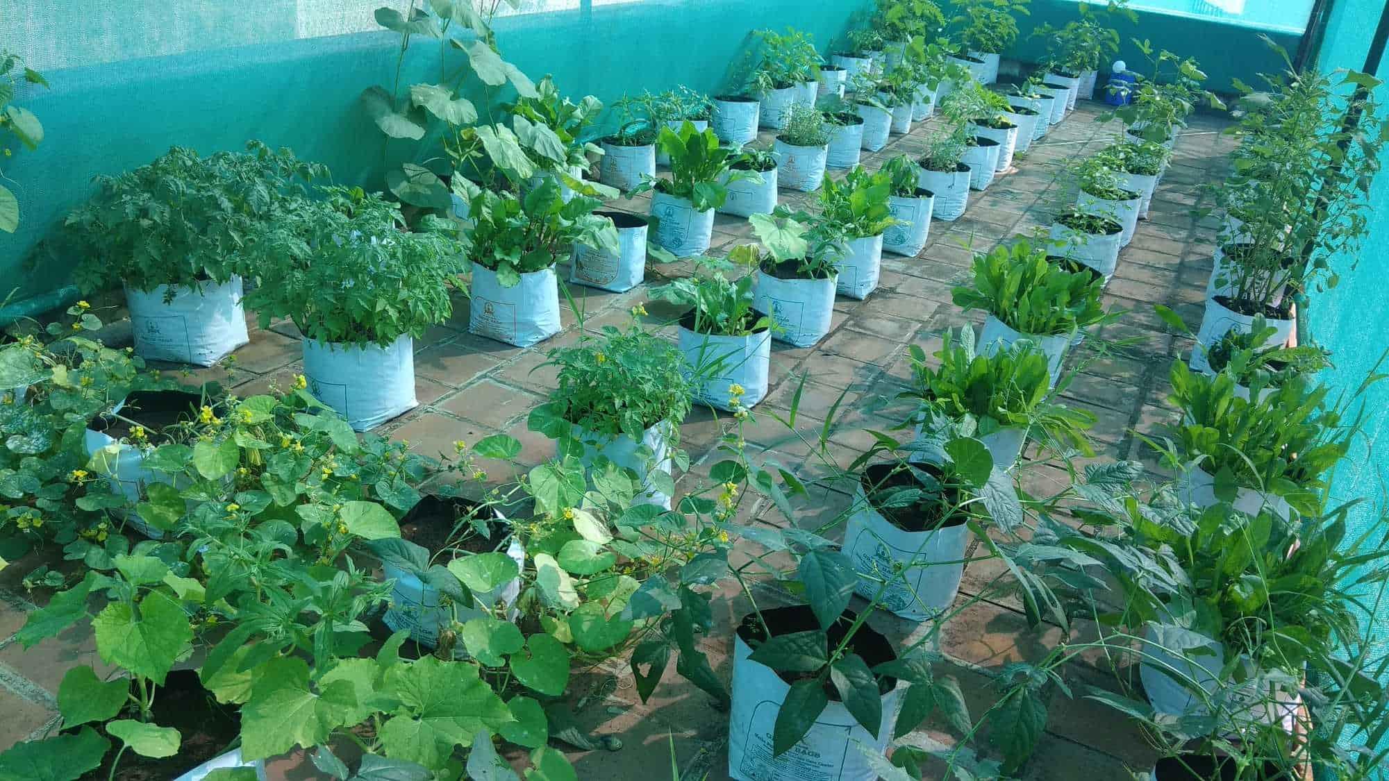 Ara agri business palamedu fertilizer dealers in madurai justdial solutioingenieria Choice Image