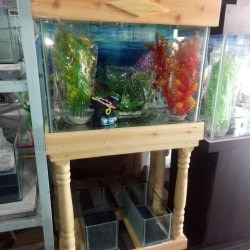 New Flower Horn Shop, Athikulam - Pet Shops in Madurai - Justdial