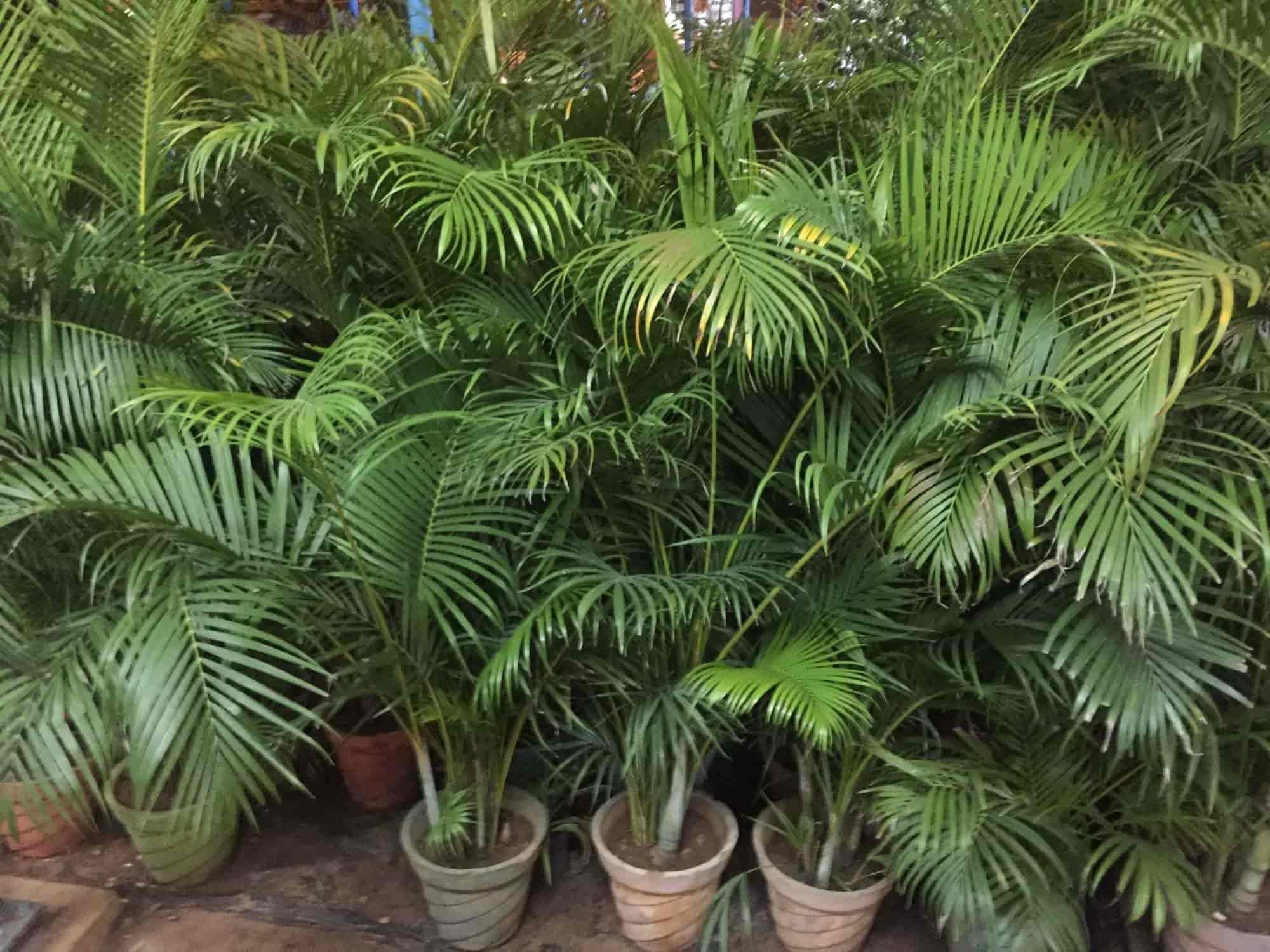 Vivek Nursery Garden Photos Palanganatham Madurai Plant Nurseries