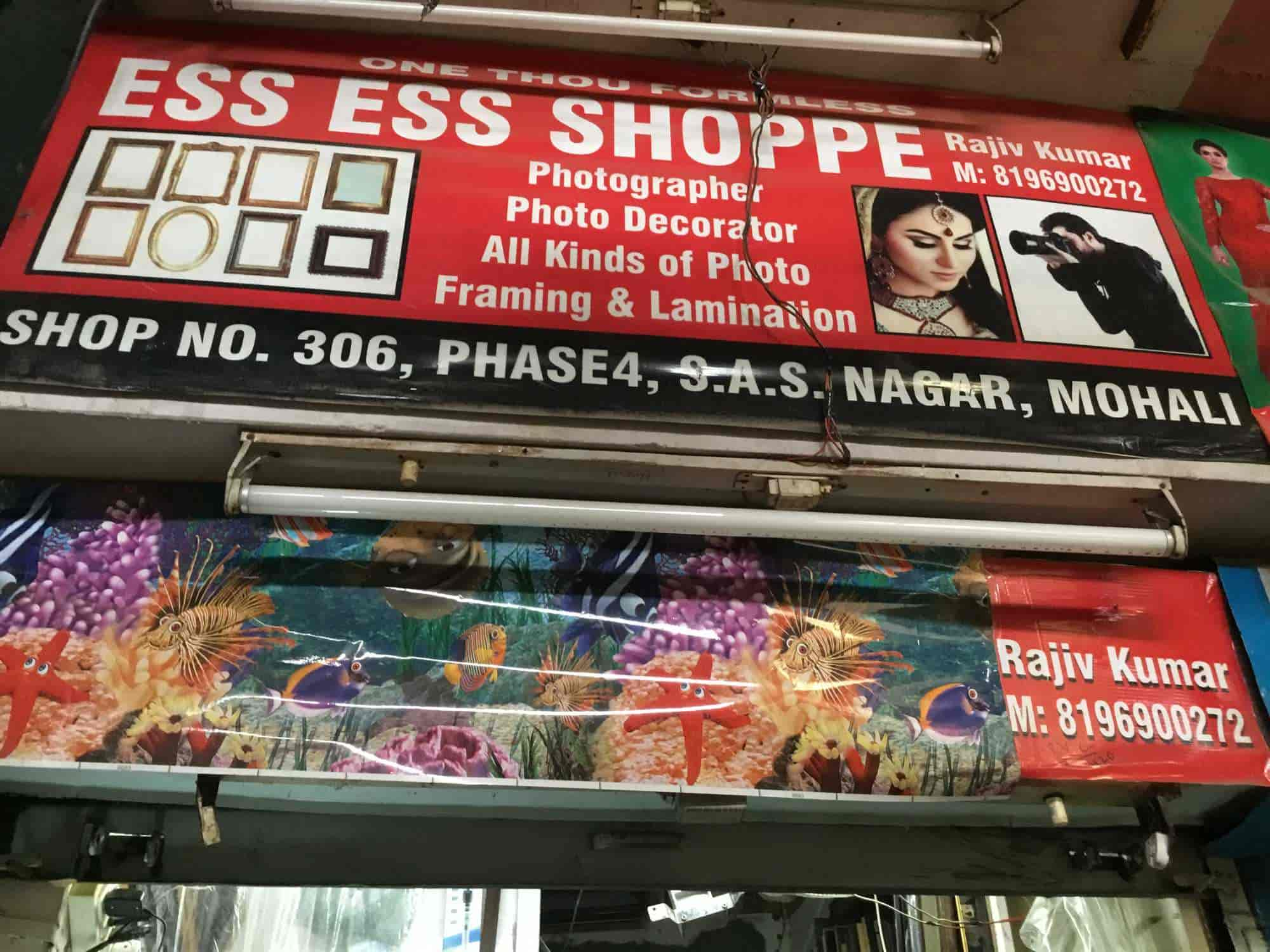 King Pet Store Chandigarh Sector 59 Phase 4 Pet Shops In Mohali Chandigarh Justdial