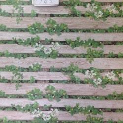 Fazal Wall Paper Specialists Bandra West Wall Paper Dealers In