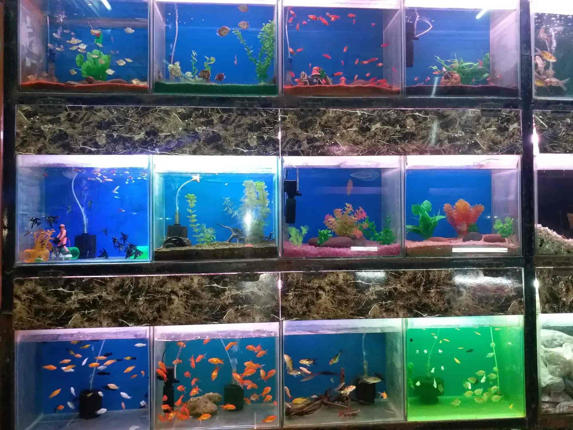 Hami Fish Aquarium Jogeshwari West Pet Shops In Mumbai Justdial