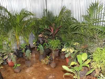 Plant Nursery New Leaf Closed Down Photos Virar West Mumbai