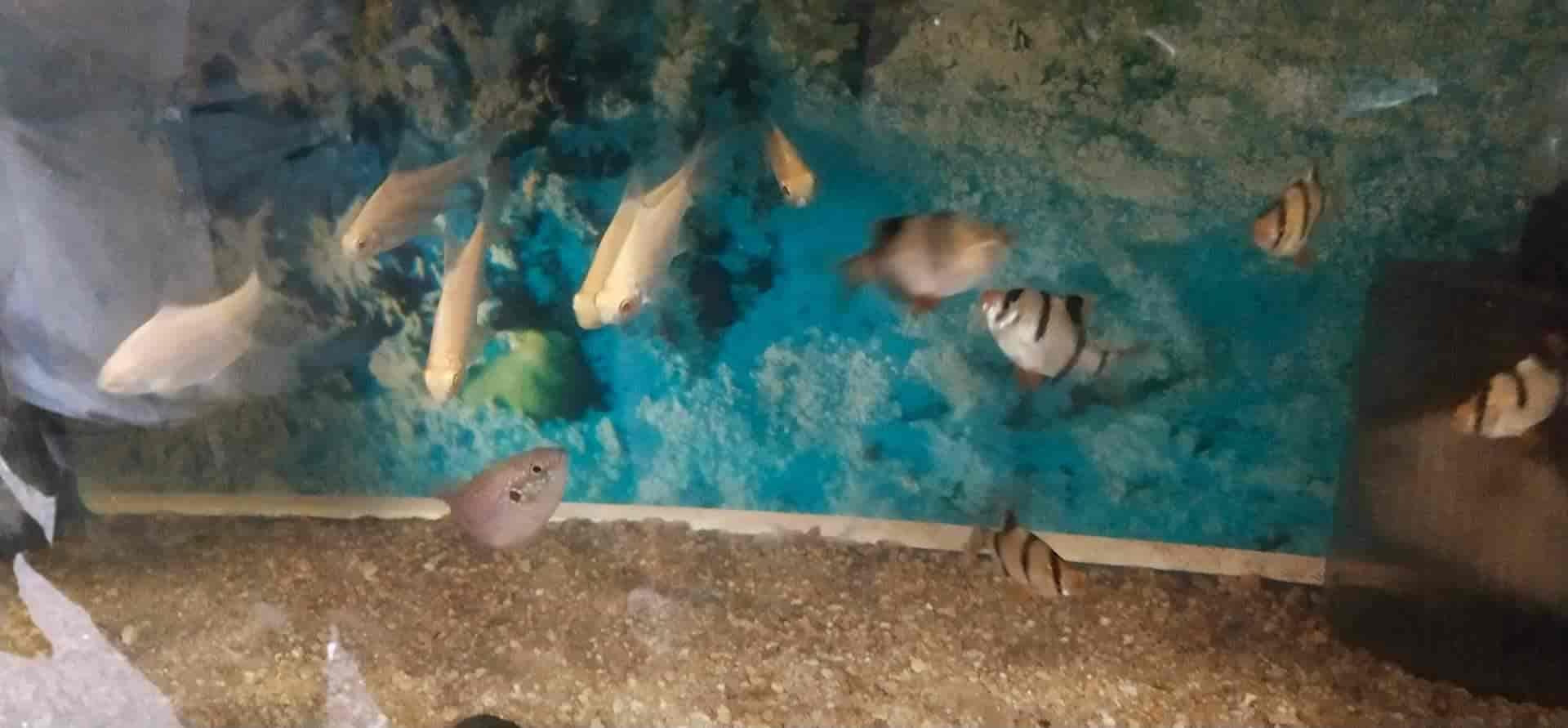 Ali Shark Point Reviews, Andheri East, Mumbai - 2 Ratings